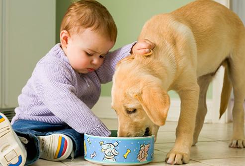 Alimentos, água e brinquedos dos pets devem ficar fora do alcance dos pequenos
